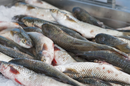 grey mullet: pile of fresh fish mullet at the market