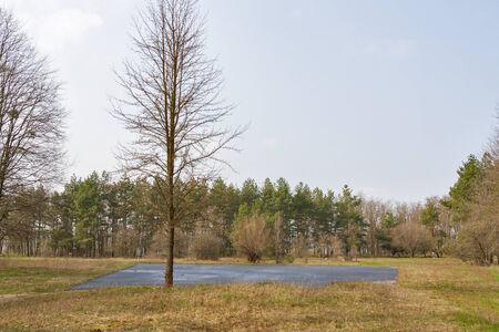 helipad: asphalt helipad in the  spring woods