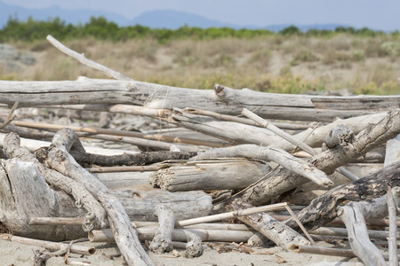 fragments of dead trees closeup on the beach of Tuscany, Italy