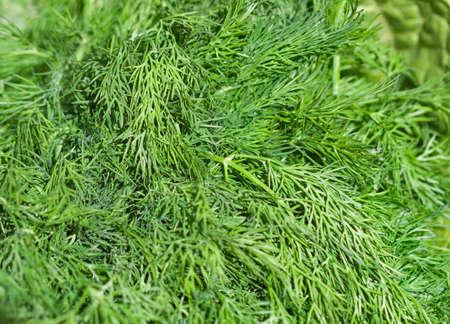 fresh green dill background closeup photo
