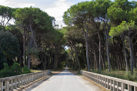 Old bridge and road through San Rossore Regional Park, Tuscany, Italy Archivio Fotografico