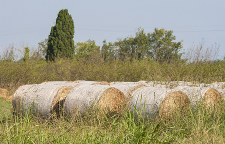 bails: Straw bales on the summer field Stock Photo