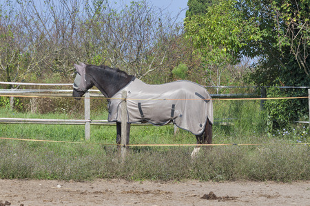 skewbald: Horse on farm covered with face fly mask and body blanket standing at the fence line in sunshine