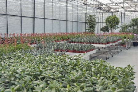 indoor plants: Interior of shop for greenhouse cultivation and sale of indoor plants