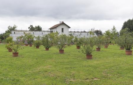 nurseries: various trees and plants growing in pots outdoor in Tivoli Park. Ljubljana, Slovenia. Stock Photo