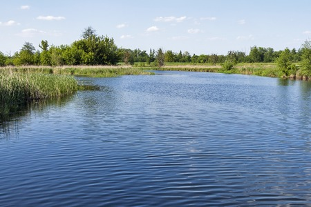 cicha rzeka Ros w lecie, Ukraina Zdjęcie Seryjne