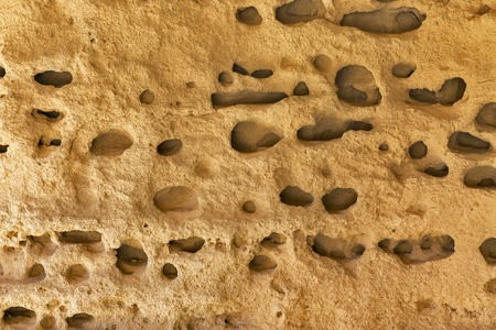 full of holes: Full of holes sea stone background closeup