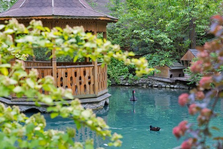 Summer colorful landscape with garden pond, wooden gazebo on the island, black swan and wild duck. Stock Photo