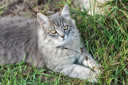 Gray street cat sitting in green grass closeup
