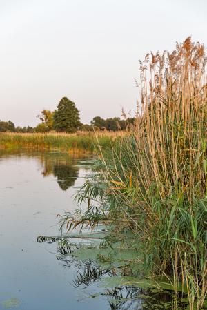 Ros river sunset summer reed, Central Ukraine.