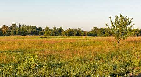 Ros river valley sunset summer landscape, Central Ukraine.