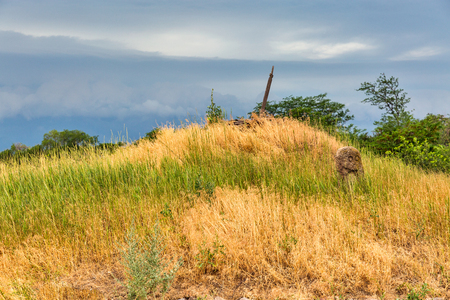 Summer landscape with ancient stone idol of Khortytsia island, Ukraine