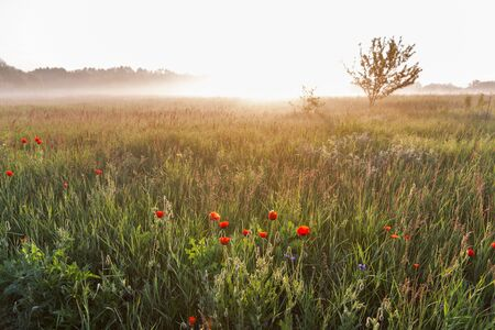 Summer early morning landscape with poppies and haze over Ros river, Ukraine. Banco de Imagens