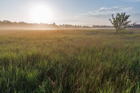 Summer early morning landscape with haze over Ros river, Ukraine.