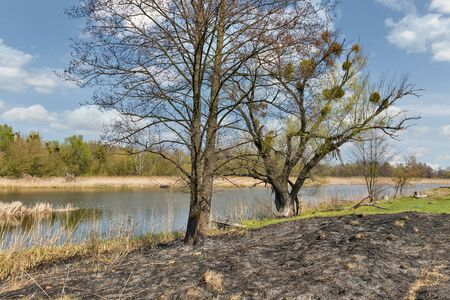 Scorched grass by the Ros riverbank in early spring, Ukraine Zdjęcie Seryjne