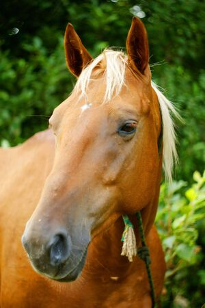 Portrait of a horse on a background of foliage