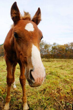 foal in autumn pasture