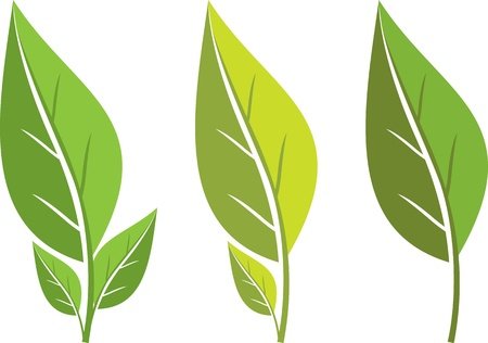 collection of green leaf Vector