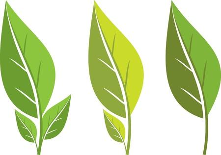 bionomics: collection of green leaf