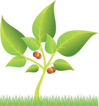 orange tree on the grass Illustration