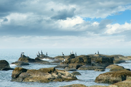 seabirds on the rocks before the storm