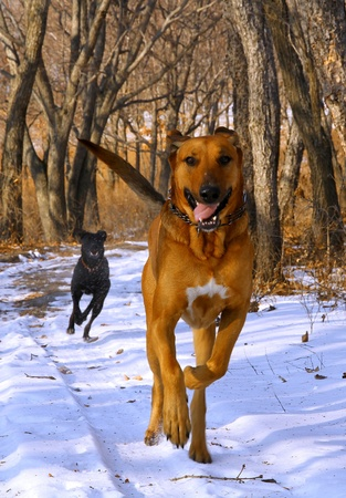 dog running in the snow in the woods