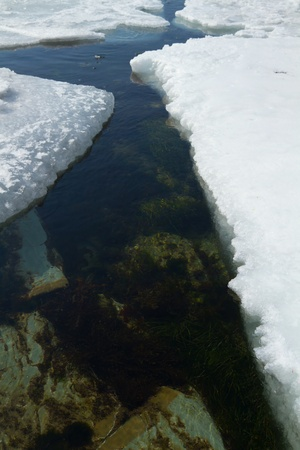 crack in the sea ice in spring 스톡 콘텐츠