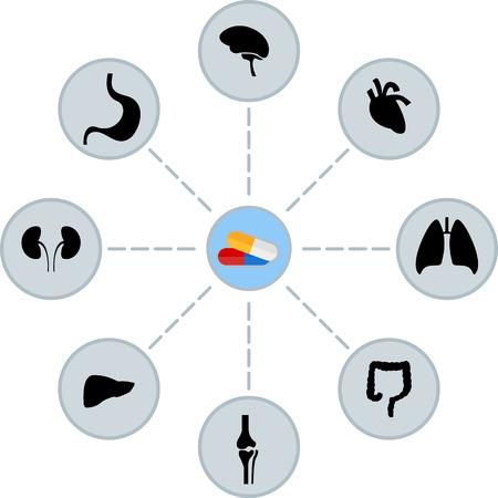 scheme of pills and human organs