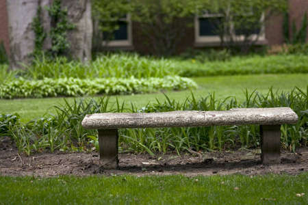 Lonely bench in the park in summer