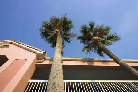 Palm tree and a hotel at unusual angle Stock Photo
