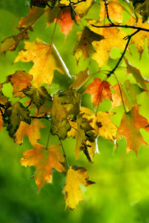Colorful autumn leaves over blurry green background
