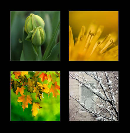 Collage of 4 pictures representing each season: winter, spring, summer, autumn