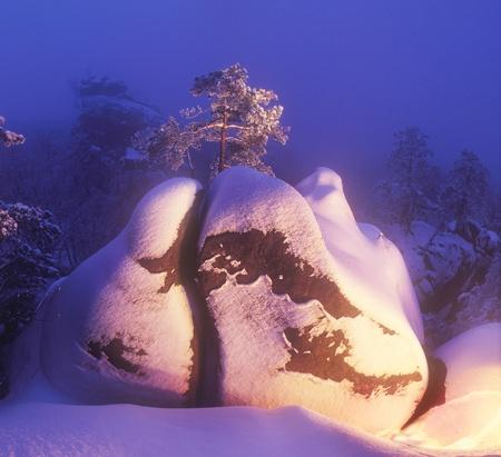 lone pine: Un pino solitario en las rocas Dovbush en Bubnische Foto de archivo