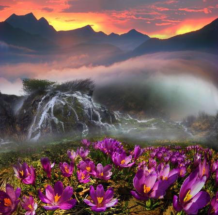 5 月に雪が溶けると、山でカバーされている花の美しいカーペット。春の山の風景、カルパティア山脈、ウクライナに覚醒についての幻想的な素晴ら 写真素材