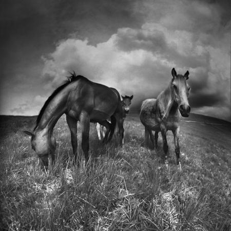 black horse: Verano en las montañas se pueden encontrar caballos criados en libertad que los tres meses de verano se pasan en estos pastos de alta montaña