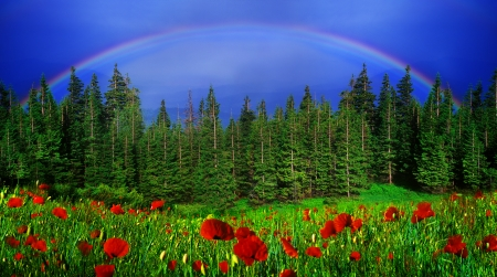 thundershower: A Rainbow-arc after a thundershower got up above the forests and fields Stock Photo