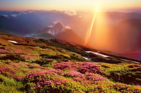 シャクナゲ、いくつかの最も美しい花の晩春に咲く、早朝霧太陽色信じられないほどの色の特に印象的です