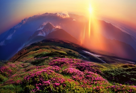 Rhododendrons, some of the most beautiful alpine flowers bloom in late spring and are particularly impressive in the early morning when the fog sun colors in incredible colors photo