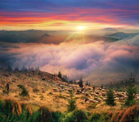 夏のカルパティア山脈の高山のフィールドは、山中伝統的に蹴ら群れ放牧と夜に夜明けからの天候のすべての種類があります。