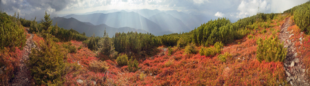 unusually: highland vegetation modest summer and unusually beautiful colors blooms in autumn, before cold weather. Blueberries- bright red, coniferous forest green, orange buk- mountains sinie- fantastic charm. Stock Photo