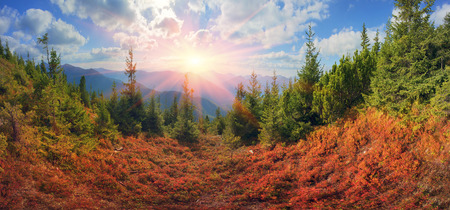 unusually: highland vegetation modest summer and unusually beautiful colors blooms in autumn, before cold weather. Blueberries, brusnika- bright red, coniferous forest green, orange buk- mountains sinie- fantastic charm. Stock Photo