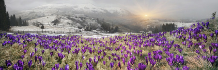 In March-April after a winter in the mountains of unstable weather, and replaced by the warmth, the sun can come quickly alpine cold, strong wind and sleet and then freezing plants and flowers photo