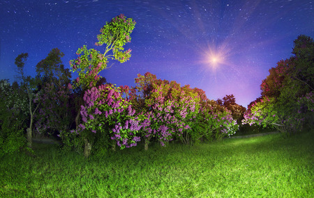 dnieper: In May, Kyiv, Ukraine, blooming lilacs in the botanical garden and other flowers that citizens lovingly grown on the slopes of the Dnieper River, decorating background hometown Stock Photo