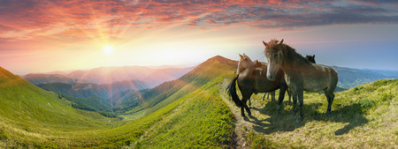Grazing wild horses on the slopes of the mountain peaks in the morning  evening, on a hot summer day. Shepherds herd of Ukrainian Hutsul released into the mountains without a guard to fall Stock Photo