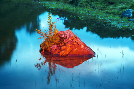 rock with a flower on the mountain lake in the Carpathian Mountains Svydovets Ukraine at dawn sky is beautiful and romantic, on a background of clear water and fabulous lighting sunrise