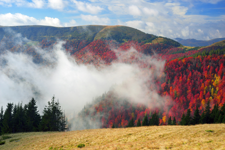 Air Morning mist at sunrise over the alpine forests and meadows of the Carpathians fall is very beautiful after the rain. Picturesque and paint colors of autumn foliage in the wild in Ukraine
