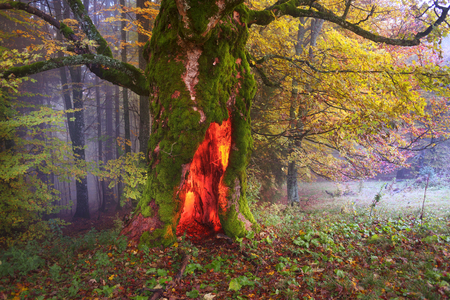 In the wild Carpathian Ukraine forest grows mysterious ancient alpine ash, like the story about the Hobbits, sprites, trolls and gnomes and other fairy creatures from legends and stories Stock Photo