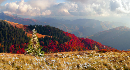 mountain ranges: In the Carpathians, golden autumn cold often turns into snow, and then again come warm sunny days. Against the background of high mountain ranges and beautiful beech forests scenic Stock Photo