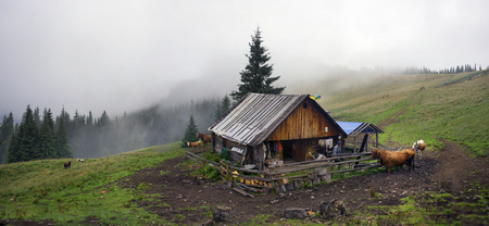 Ukraine, Vorohta- July 28, 2015: House herders of sheep, cows and horses in the fog. The house cook cheese, dried mushrooms, sleep in the night. People live here summer- only three months until the cattle on the meadow. Editorial