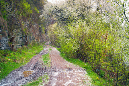 wind blown: Wind carries the petals of cherry, plum, cherry, plum - covering the white dirt road along the rocky shore. The aroma in the air on a background of fresh herbs and shrubs trav? symbolizes spring